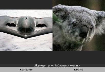 Самолёт похож на коалу