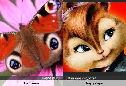 Крылья бабочки похожи на мордочку бурундука
