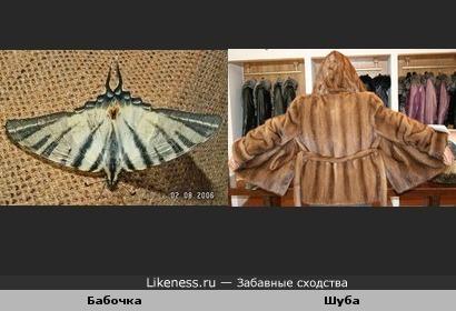 Крылья бабочки похожи на шубу