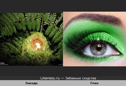 Гнездо в папоротнике похоже на глаз