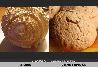 Ракушка похожа на овсяное печенье