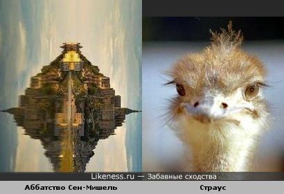 Аббатство на острове Мон-Сен-Мишель и его отражение похоже на голову страуса