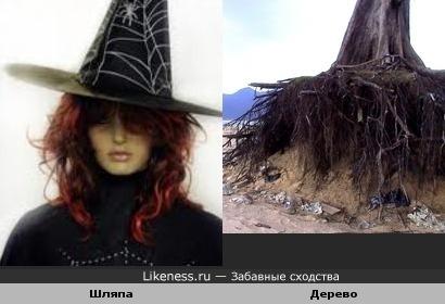 Дерево с оголёнными корнями похоже на шляпу ведьмы
