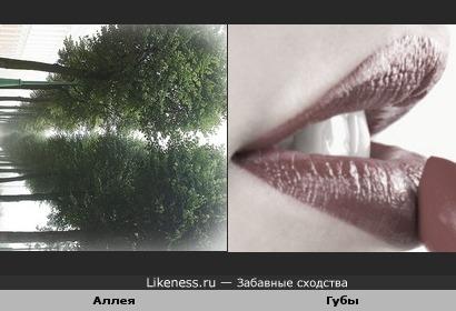 Аллея в Санкт-Петербурге похожа на губы