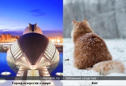 Город искусств и наук похож на кота со спины