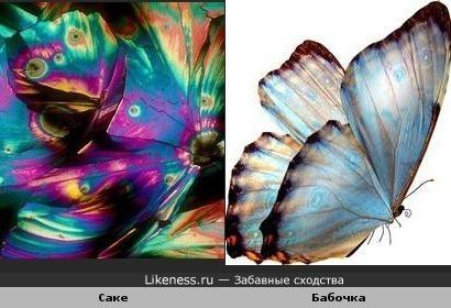 Саке под микроскопом похоже на крылья бабочки