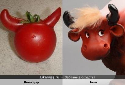 Помидор похож на быка