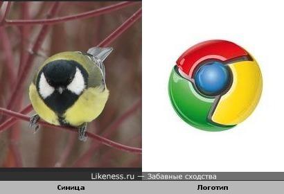 Синица напоминает потускневший логотип Гугл Хром