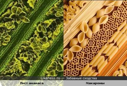 Лист ананаса под микроскопом похож на макароны