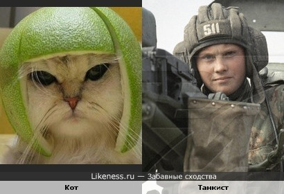 Этот кот похож на танкиста