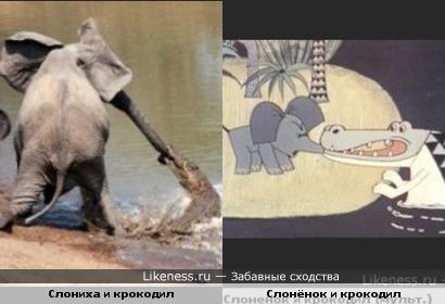 Крокодилы нападают на слонов.