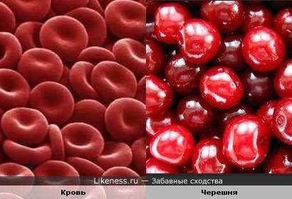 Клетки крови похожи на черешню