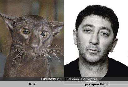 Кот и Григорий Лепс похожи