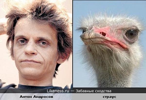 Антон Андросов и страус