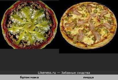 Бутон мака и пицца