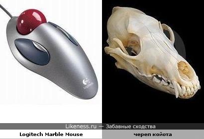 Трекбол vs череп