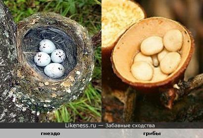 Необычные грибы ©