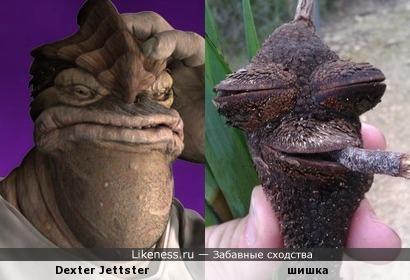Dexter Jettster и шишка