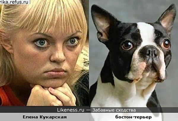 Елена Кукарская похожа на эту собаку