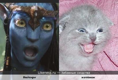 Они явно курили одно и то же)))))