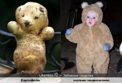 картоха похожа на медвежонка