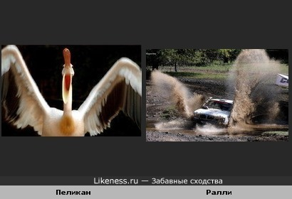 Пеликан похож на Автомобиль в ралли