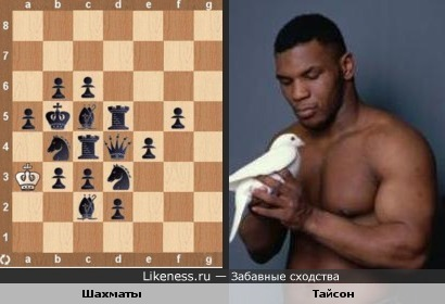 Шахматы похожи на Тайсона