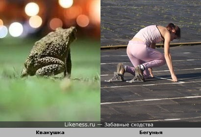 Квакушка похожа на бегунью