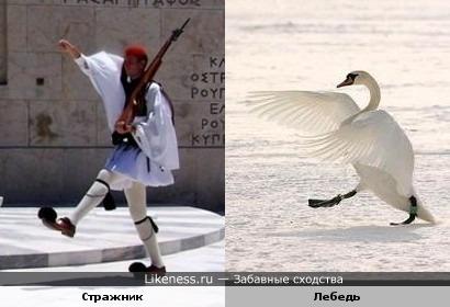 Стражник похож на лебедя