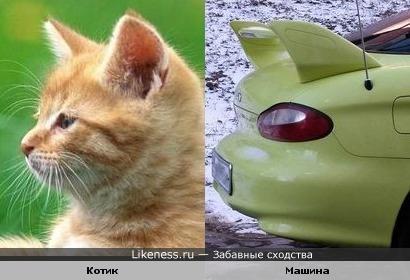 Котик похож на машину
