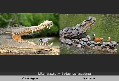 Крокодил похож на Карягу