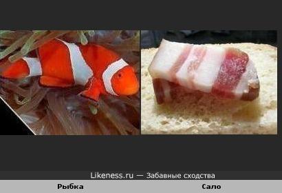 Рыбка похожа на Сало