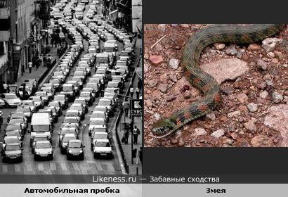Автомобильная пробка похожа на змею