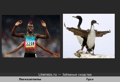 Легкоатлеты похожи на гусей