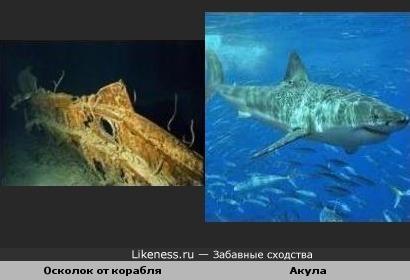 Под водой все одинаковы