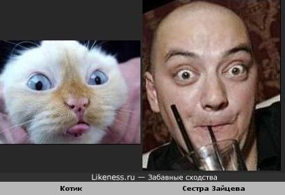 Котик похож на сестру Зайцева