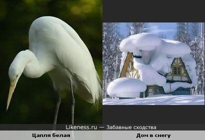 Цапля белая похожа на дом в снегу