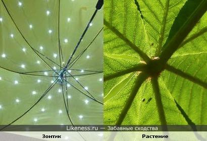 Зонт похож на растение