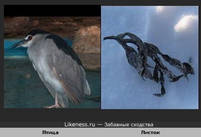 Листок похож на птицу