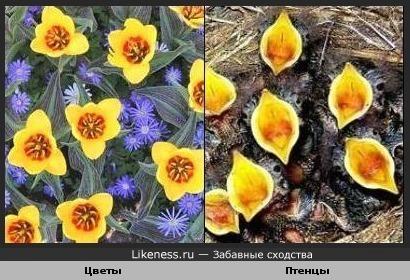 Цветы похожи на птенцов