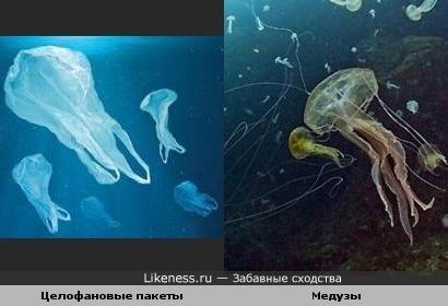 Целофановые пакеты похожи на Медуз