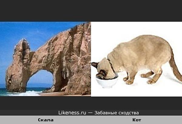 Скала похожа на кота