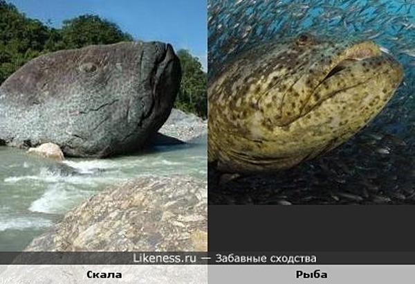 Скала похожа на рыбу