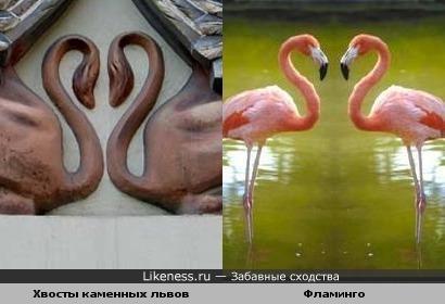 Пара львиных хвостов похожа на пару фламинго