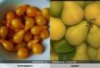 Декоративные помидоры похожи на груши