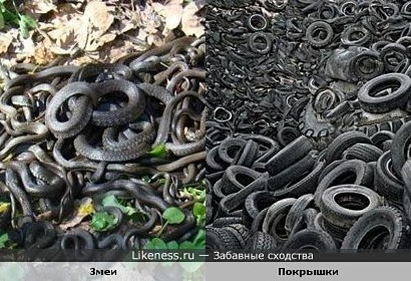 Скопление змей похоже на кучу покрышек