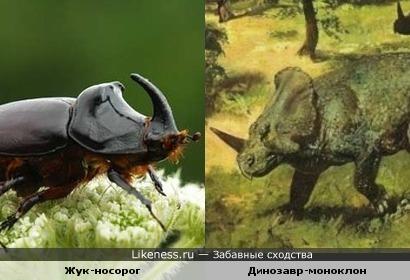 Жук-носорог похож на динозавра