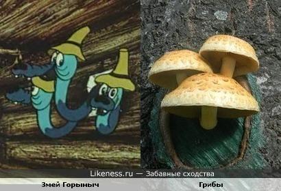 Горыныч и грибы