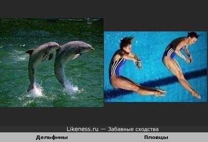 Пловцы и дельфины