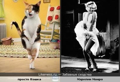 просто Кошка похожа на Мэрилин Монро